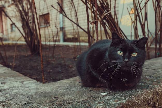 建物や木の隣に屋外に座っている黒猫