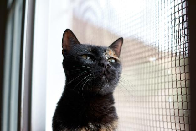 窓の近くに立っている黒猫