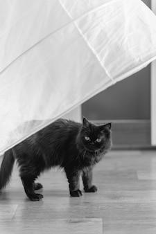Черная кошка стоит под белым платьем невесты