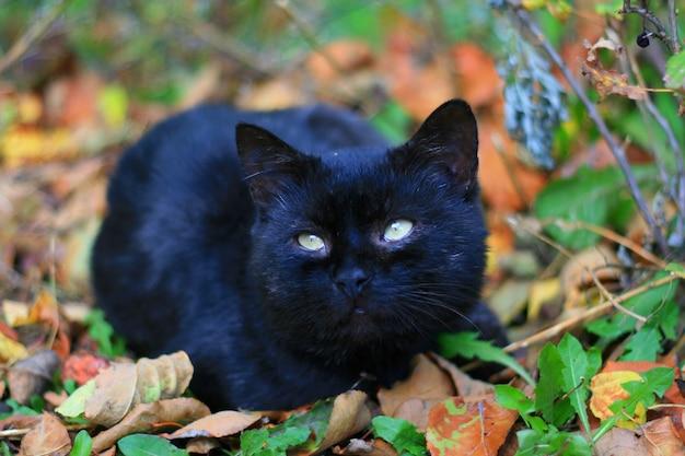 葉の上にとどまる黒猫