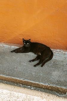 Black cat in the streets closeup