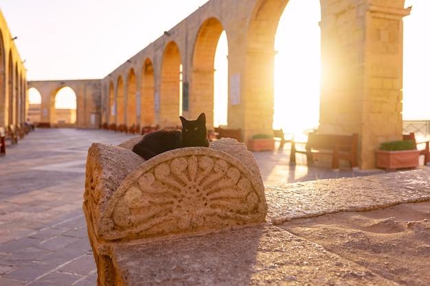 The black cat in upper barrakka gardens early in the morning at sunrise, valletta, malta.