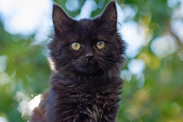 Черная кошка гуляет в ярких цветах. черная красивая кошка и цветущие растения в саду. китти гуляет в летнем пейзаже.