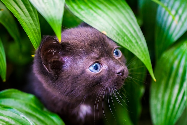 Black cat walking down the street, green grass