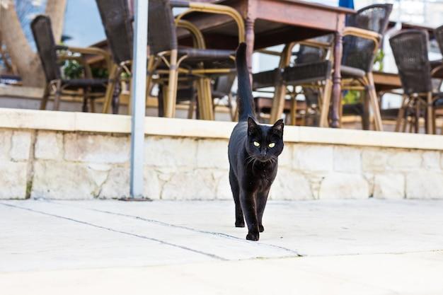 Черная кошка гуляет на открытом воздухе в уличном кафе