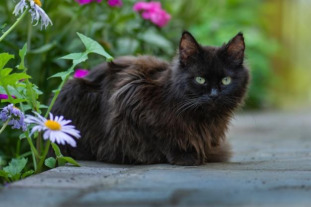 검은 고양이 산책과 아름다운 정원 즐기기
