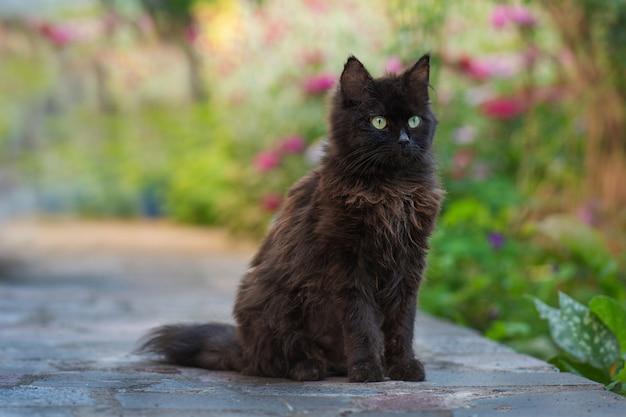 Чёрный кот идёт через заросли цветов. черная кошка нюхает цветок в красочном цветущем саду.