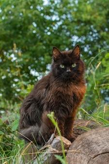 黒猫は花のパッチを歩きます