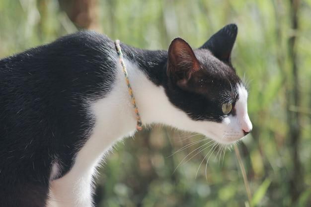 검은 고양이, 앞을보고 있었다