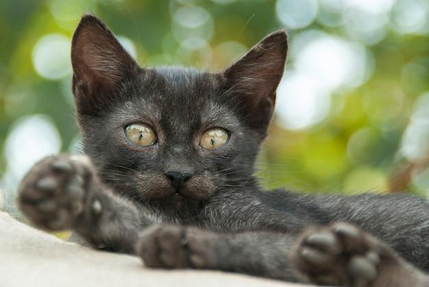 Черная кошка с фоном из фокуса