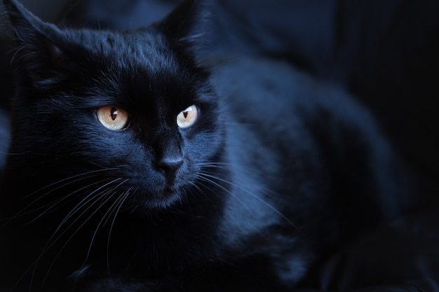Black cat with bright eyes against a black background