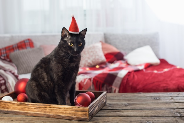 Черная кошка с елочным шаром на деревянном столе в помещении