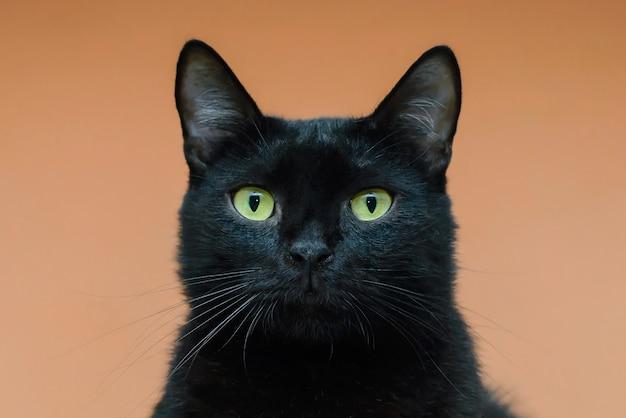 Черная кошка с зелеными глазами крупным планом