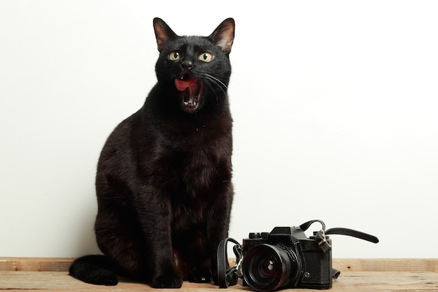 Черная кошка с высунутым языком рядом с ретро-камерой