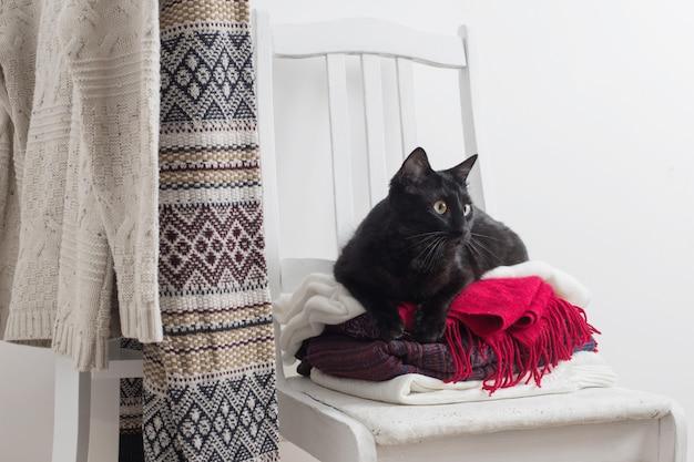Черная кошка с зимней одеждой на стуле