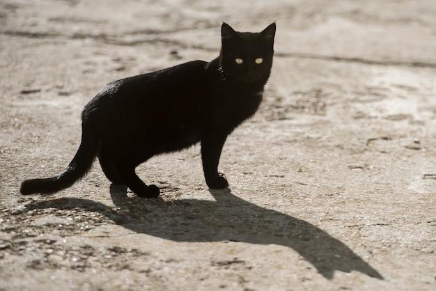 黄色い目と大きな影の黒い猫