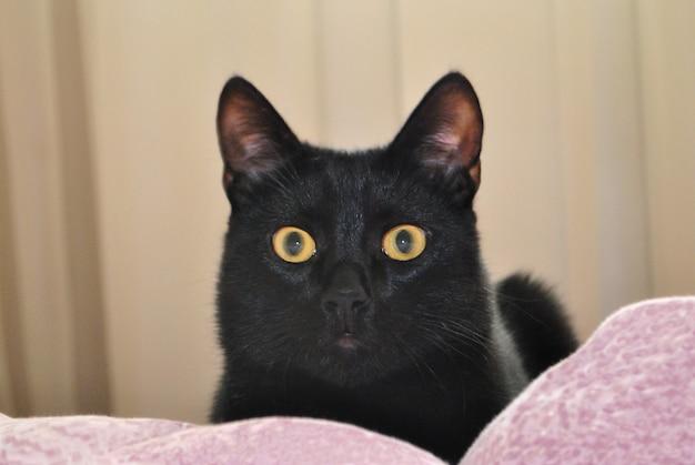 黄色い目を持つ黒猫がベッドカバーのベッドに横たわってカメラを見る