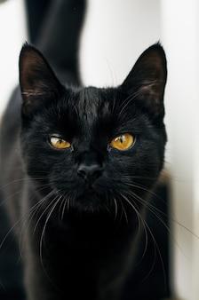 Черная кошка с желтыми глазами смотрит в камеру с размытым