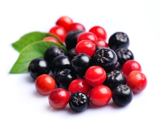 Черноплодная рябина и калина. осенние ягоды