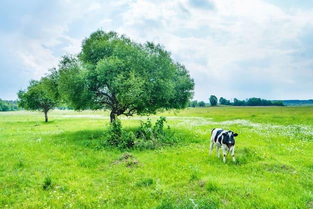 Черная корова на зеленом поле с большим деревом. сельский пейзаж