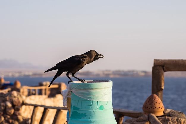 A black crow on a bright colorful rubbish bin