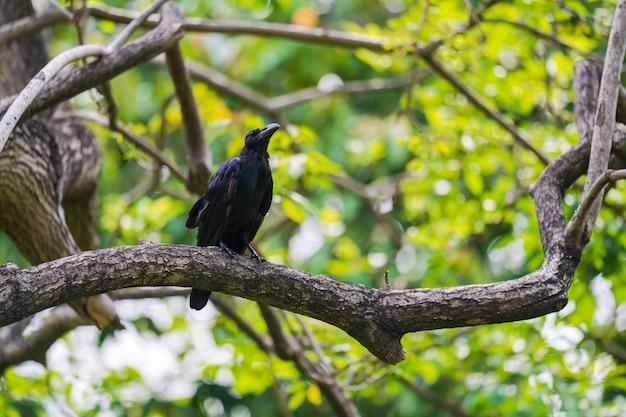 Черная ворона на ветвях деревьев