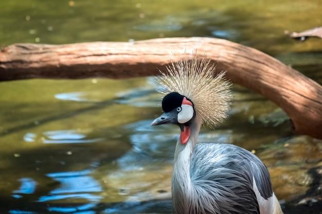 フエンヒローラのバイオパークにあるホオジロカンムリ