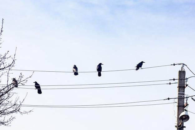 Черные вороны сидят на электрических проводах. птицы наверху.