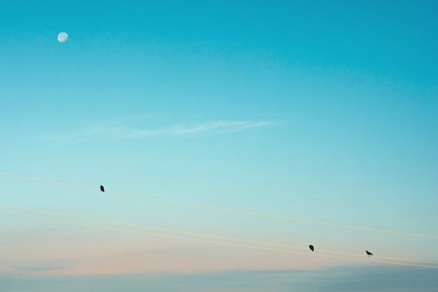 黒いカラスは、朝の月を背景にワイヤーの上に座っています。月明かりの下でワタリガラスのシルエット。白い月と青い(シアン)空の鳥のミニマルなイメージ。
