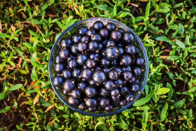 ガラス板の黒スグリの果実、上面図 Premium写真