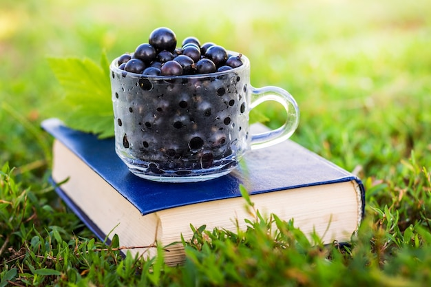 晴天の草の上の庭の本の黒スグリの果実