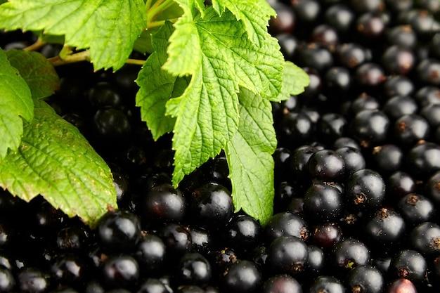 緑の葉、健康的なビーガンフード、夏のビタミン食品と黒スグリの新鮮なベリーのクローズアップ
