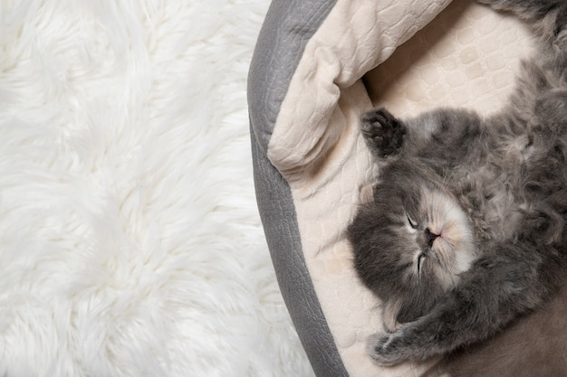 Black cute kitten is sleeping. the kitten sleeps with legs raised to the top.