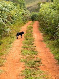 Black dog in a dirt rural road