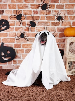 幽霊の衣装を着た黒い犬