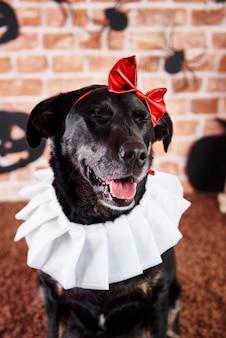 ハロウィーンの衣装を着た黒犬