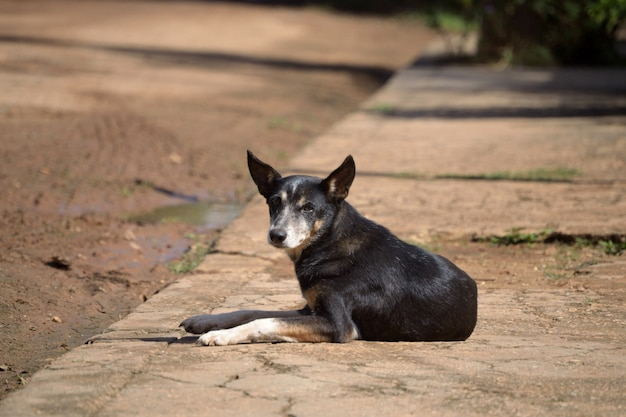 Black dog lying on a sunny sidewalk, gazing at the camera