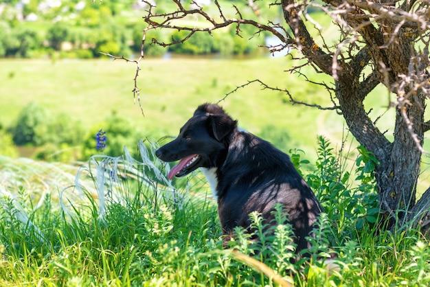 나무와 잔디와 녹색 필드에 검은 개. 시골 풍경