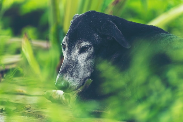 Black dog in the shady garden is natural.