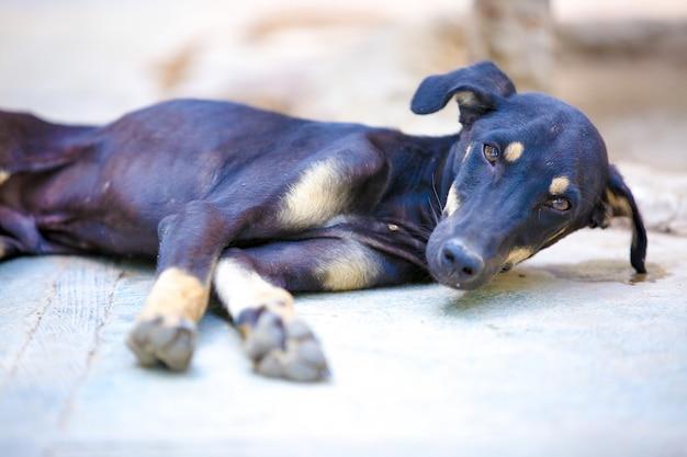 Black dog sleeping on ground