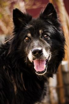 Черная собака улыбается
