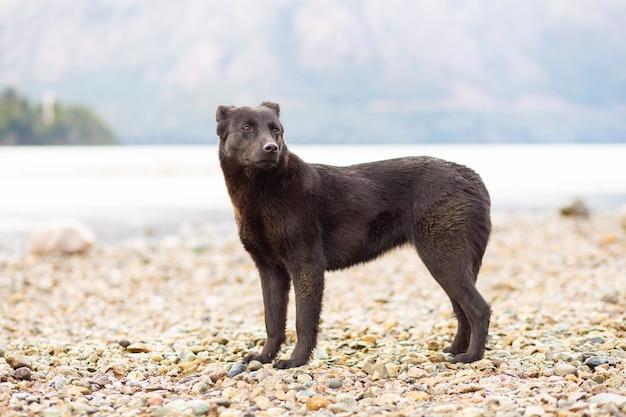 바릴로체에있는 호수의 물가에 서있는 검은 개