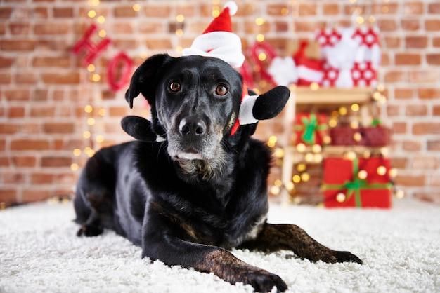 Black dog wearing a santa hat