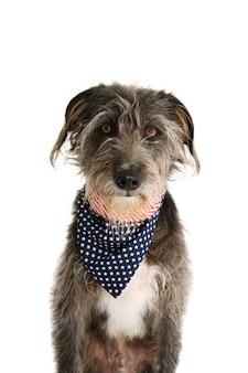 Black dog with american flag bandana. isolated studio shot on white background.