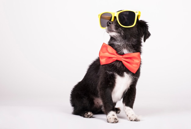 Black dog with yellow sunglasses and red bow tie on white
