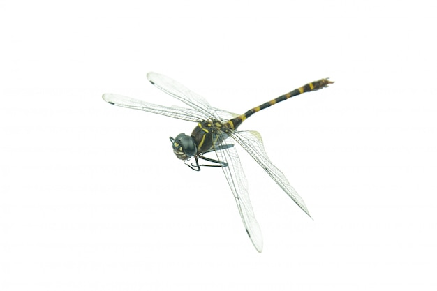Black dragonfly isolated on white