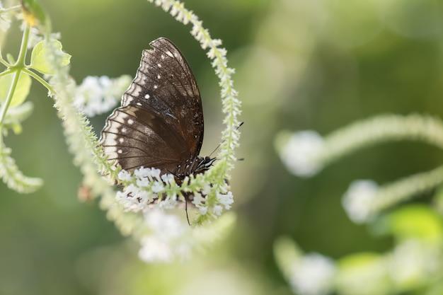 花の上に黒い卵の蝶