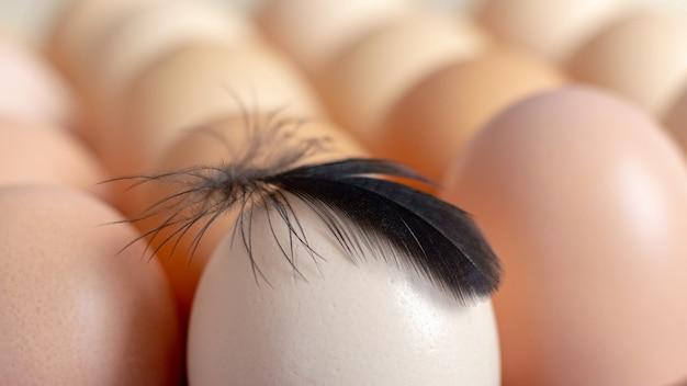トレイの卵に黒い羽、消費用の卵_
