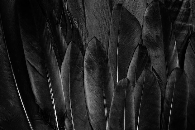Black feather texture background.