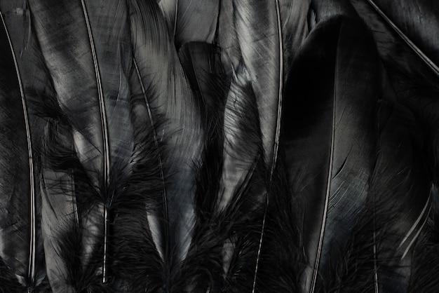 Black feathers background